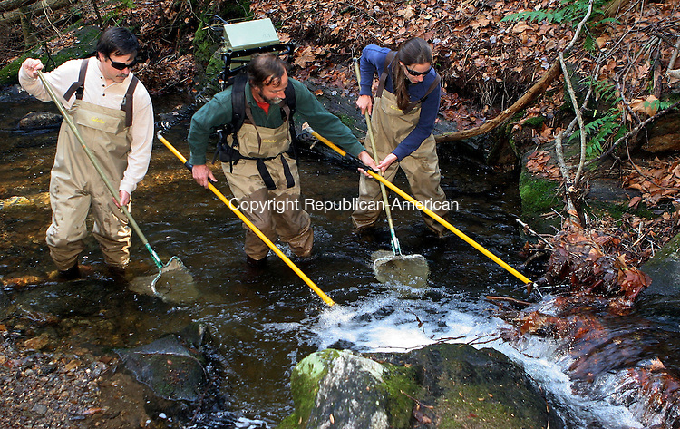 WATERTOWN, CT-31November 2006-110106TK04- (left to right) Fisheries Biologist Tim Barry, Mike Humphreys, Project Leader for Connecticut Trout Program and Lacey Wood, Research Technician use a electric stimulus impulse to stun native brook trout on the Jerricho Brook that runs through the Mattatuck State Forest in Watertown. Tom Kabelka Republican-American (Tim Barry, Mike Humphreys, Lacey Wood)