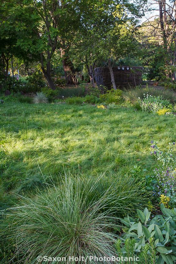 Meadow lawn in habitat garden at Marin Art and Garden Center