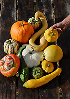 Colourful autumn Harvest at Forde Abbey.<br /> <br /> Kitchen gardener Olly Hone among the colourful pumpkins, squashes and gourds at the Forde Abbey Monastery on the Dorset/Somerset boarder.<br /> <br /> Forde Abbey is a former Cistercian monastery dating back to the early 12th century