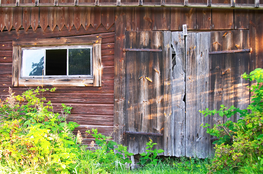 Traditional style Swedish wooden painted house. A door Barn Overgrown unkempt garden. Fading peeling painting. Smaland region. Sweden, Europe.