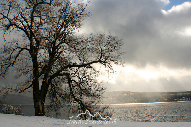 A Lakeshore tree and shimmering sunlight on Lake Coeur d' Alene in winter.