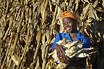 Frances Mtonga harvests corn in Chibamu Jere, Malawi. Pregnant for the third time, Mtonga and other women in the village get support from the Maternal, Newborn and Child Health program of the Livingstonia Synod of the Church of Central Africa Presbyterian. Her husband works in South Africa and sends home money to support her and her children.