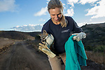 Santa Catalina Island Fox (Urocyon littoralis catalinae) biologist, Julie King, carrying fox during vaccination and health check up, Santa Catalina Island, Channel Islands, California
