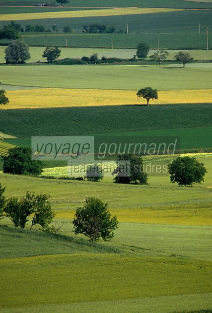 Europe/France/Auvergne/63/Puy-de-Dôme/Parc Régional des Volcans/Env d'Aigueperse: Paysage de Limagne
