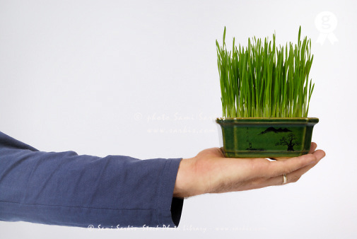 Man holding pot of green wheat against white background, close-up of hand (Licence this image exclusively with Getty: http://www.gettyimages.com/detail/sb10066852l-001 )