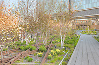 A view of the landscaping in High Line Park planted along the old railroad tracks left in place.  The High Line is an urban aerial greenway reclaimed from the abandoned elevated West Side Line in New York City's Meatpacking district.