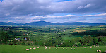 County Kilkenny, Ireland<br /> Patchwork pattern of fields and pastures in the valley of the River Barrow with the Blackstairs Mountains in the distance