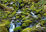 Barnes Creek, Olympic National Park, Washington, USA