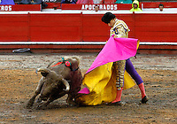 MANIZALES-COLOMBIA. 6-01-2014. El matador de toros Castrillon lidiando a camarero de 452kg de peso de la ganader'a de Santa Barbara durante la temporada taurina de la 58 feria de Manizales /  The bullfighter Castrillon waiter dealing with weight 452 kg livestock Santa Barbara during the bullfighting season 58 Feria of  Manizales .Photo: VizzorImage / Santiago Osorio / Stringer