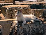 Cat in the sun, Ephesus, Turkey