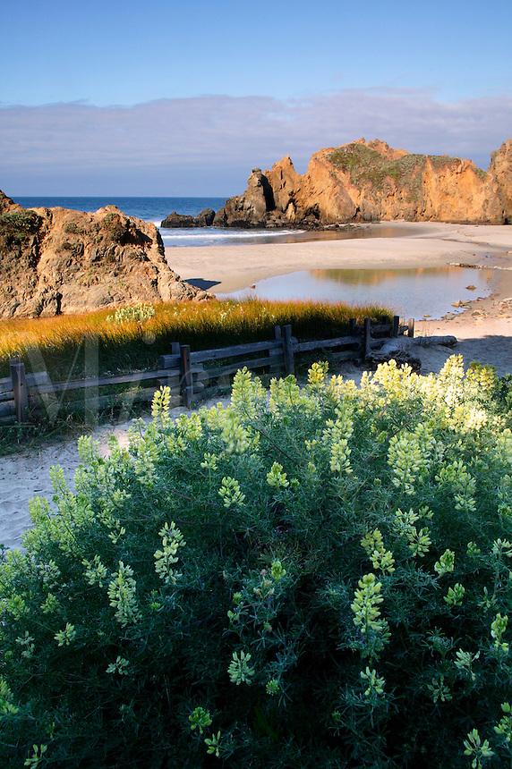 Pfieffer Big Sur State Park and Pfeiffer Beach, Central Coast, Big Sur, California.