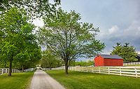 Harrodsburg, Kentucky: Tree lined lane in the Shaker Village of Pleasant Hill