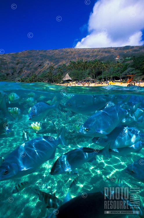 Under/over view at Hanauma bay marine life sanctuary, Oahu