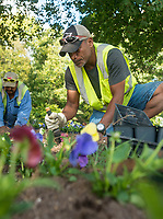 NWA Democrat-Gazette/BEN GOFF @NWABENGOFF<br /> Raymont Lorennij with a crew from Springdale Public Works plants flowers Monday, Oct. 8, 2018, along the Razorback Regional Greenway in downtown Springdale.