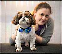 BNPS.co.uk (01202 558833)<br /> Pic: PhilYeomans/BNPS<br /> <br /> Bertie with rescue worker Melissa Bull.<br /> <br /> Meet Bertie the bow-legged Shih-Tzu puppy...<br /> <br /> A rescue centre has launched a crowd funding page to raise the &pound;4,000 needed to help him run around again.<br /> <br /> One year old Bertie has been abandoned by his owners who couldn't afford the cost of his life changing operations, but Ardley rescue centre boss Annabelle Weir from Bicester in Oxfordshire is determined to give bow-legged Bertie a second chance.