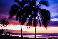 Palm trees at sunset at Haleiwa Alii Beach Park, North Shore of Oahu, with Kaena Point in the background