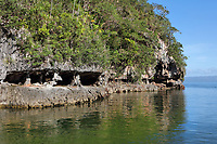 Erosion of the limestone forming caves, on the coast in the Parque Nacional de los Haitises, or Los Haitises National Park, on the North East coast of the Dominican Republic, in the Caribbean. The park was established in 1976 and consists of limestone karst scenery, mountains, subtropical forest and mangrove forests along the coast. Picture by Manuel Cohen