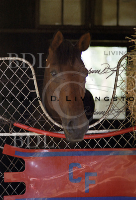 Davona Dale, champion, winner of two! filly Triple Crowns, Calumet Farm trainee at Saratoga 1979