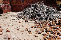Dried coconuts and palm tree branches (stove wood) seen piled up on the yard of a dried shrimp manufacure in Pontal do Peba, Brazil, 13 March 2004.