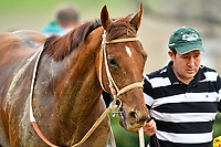 HOT SPRINGS, AR - FEBRUARY 19: Hawaakom with handler after winning the Razorback Handicap at Oaklawn Park on February 19, 2018 in Hot Springs, Arkansas. (Photo by Ted McClenning/Eclipse Sportswire/Getty Images)