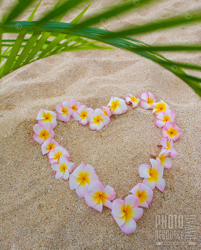 Aloha and Love- plumeria flowers on the beach in the shape of a heart, with a palm leaf for shade