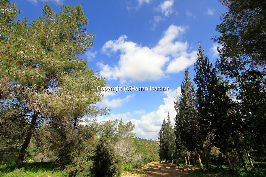 Israel, Samaria, a view of Iron forest