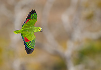 Brazil 2017 Birds