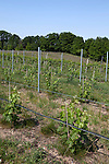 Vineyards on Old Mission Peninsula, Lake Michigan, Traverse City area, Michigan, USA