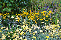 Achillea Moonshine AGM yarrow in yellow colors, with Coreopsis verticillata Zagreb yellow color theme garden