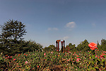 Israel, Wohl Rose Park of Jerusalem