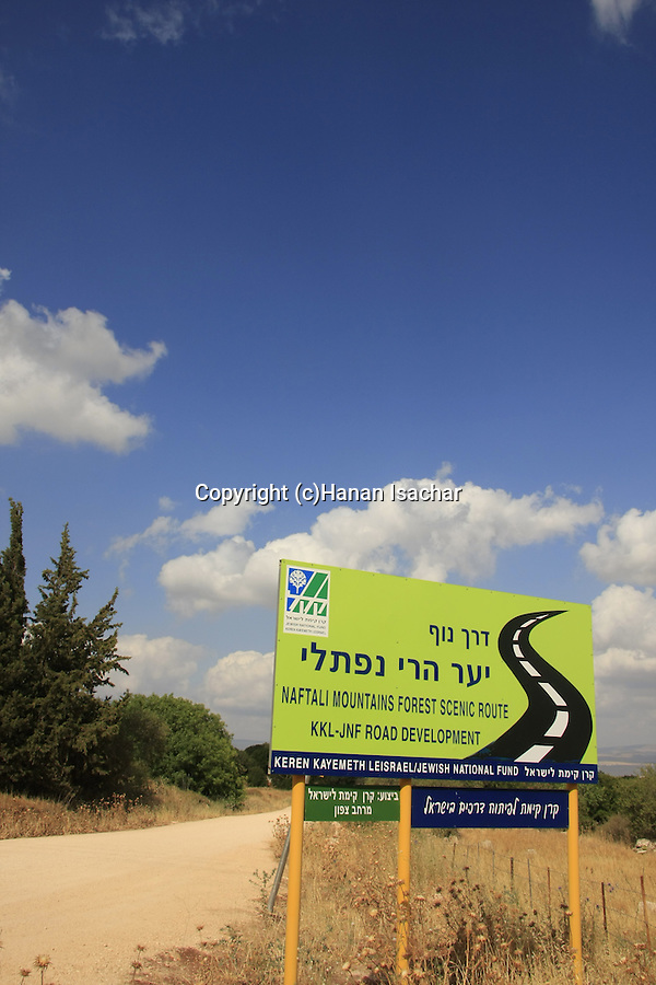 Israel, Upper Galilee, Naftali Mountains Forest Scenic Route