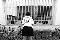 Tunisia. Tozeur Governorate. Tozeur. European tourists visit the public zoo. A woman, wearing a white tee shirt with the written words Pizza Hut Budapest, looks at a couple of lions in cage. Tozeur is an oasis and a city in south west Tunisia, but also the capital of the Tozeur Governorate. 20.09.1994 © 1994 Didier Ruef ..