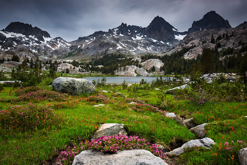 Wildflowers at Banner and Ritter Peaks, Lake Ediza, Sierra Nevada
