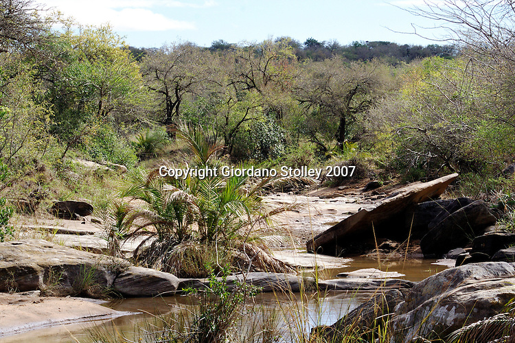UMFOLOZI - 3 July 2007 - The bushveld and a small, nearky dried up river in South Africa's popular Umfolozi-Hluhluwe Game Reserve in northern KwaZulu-Natal..Picture: Giordano Stolley/Allied Picture Press