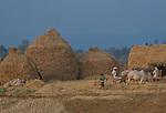 Farmers, Madhya Pradesh, India