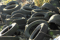 Old tyres to be used to hold the sheet down on a silage clamp.