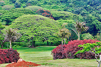 View of National Tropical Botanical Garden. Kauai, Hawaii