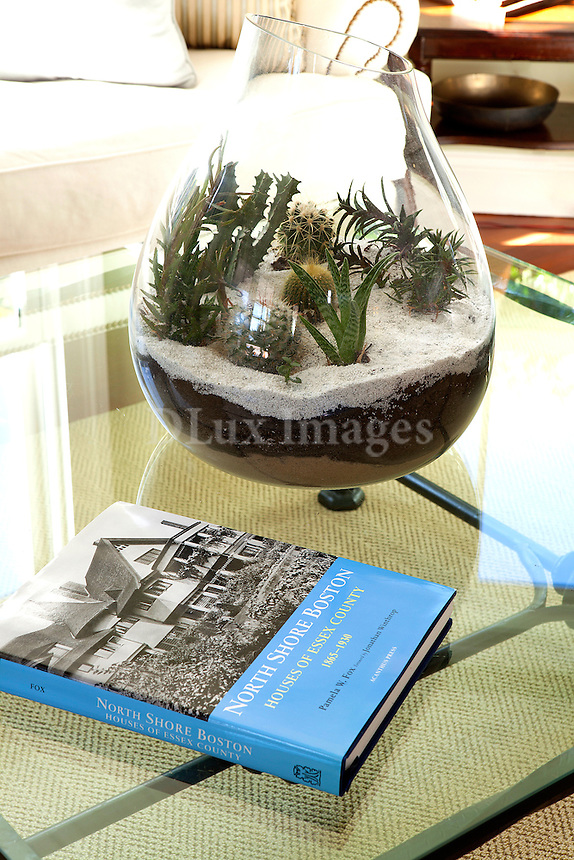 cactus in a glass vase