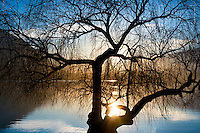 Winter Sunset on Lake Wanaka through Willow Tree Silhouette, Christopher David Thompson