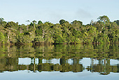 Xingu Indigenous Park, Mato Grosso State, Brazil. Reflections of the forest in the water of the Xingu River.