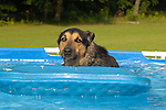 Cosmo in above ground pool.