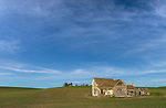 Whitman County, WA      <br /> Weathered grey abandoned house under open skies in a planted field near Pullman, in the Palouse
