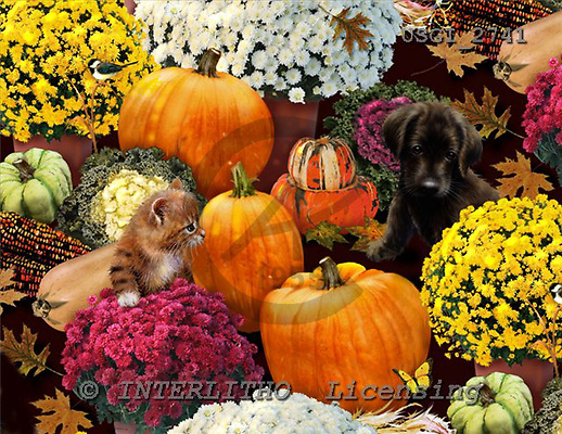 GIORDANO, STILL LIFE STILLLEBEN, NATURALEZA MORTA, paintings+++++,USGI2741,#I# pumpkins