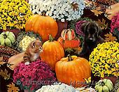 GIORDANO, STILL LIFE STILLLEBEN, NATURALEZA MORTA, paintings+++++,USGI2741,#I# pumpkins
