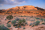 Sunset, blue sky, and plants growing in sandstone in the desert, Paria Vermilion Cliffs Wilderness, Arizona Utah