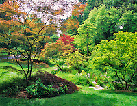 A variety of Japanese Maple trees in spring. Washington Park Arboretum, Seattle, Washington