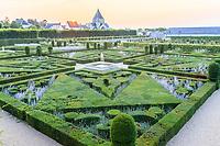 France, Indre-et-Loire (37), Villandry, Jardins du château de Villandry en août, topiaires d'ifs de buies et les fleurs mauves des Perovskia atriplicifolia