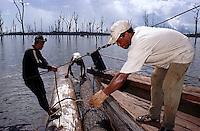 """AP""""S O CORTE DO FUNDO DO LAGO A MADEIRA … AMARRADA A UMA TORA CHAMADA DE BOIANTE PARA QUE N√O AFUNDE, SENDO ENT√O TRANSPORTADAS PARA AS SERRARIAS DE TUCURUÕ - PAR¡.<br /> 27/04/2000. <br /> ©FOTO: PAULO SANTOS/INTERFOTO"""