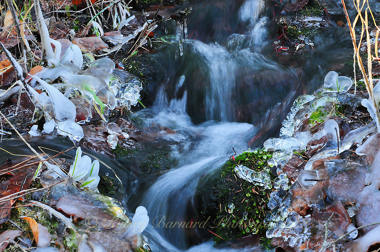 """""""DANCING DEER CREEK""""<br /> <br /> Water softly cascades down the mountain on a roller coaster of ice. The sight and the sound fills up your senses."""