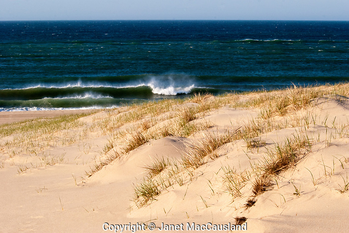 Dunes flank the wind blown beach and spraying surf; Cape Cod National Seashore, Massachusetts, USA; windy;